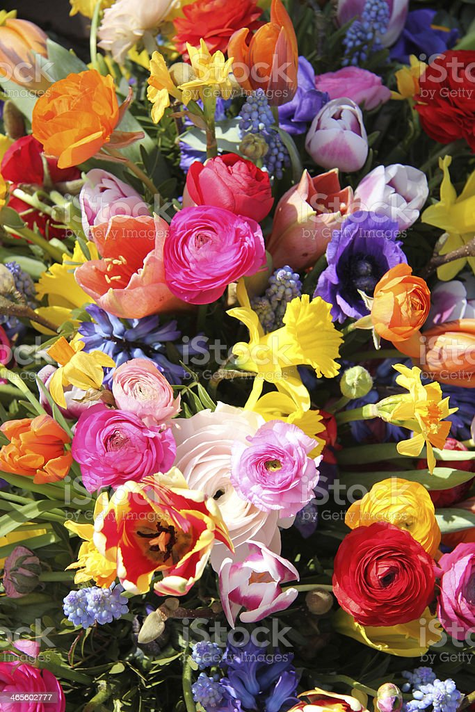 Colorful spring flowers royalty-free stock photo