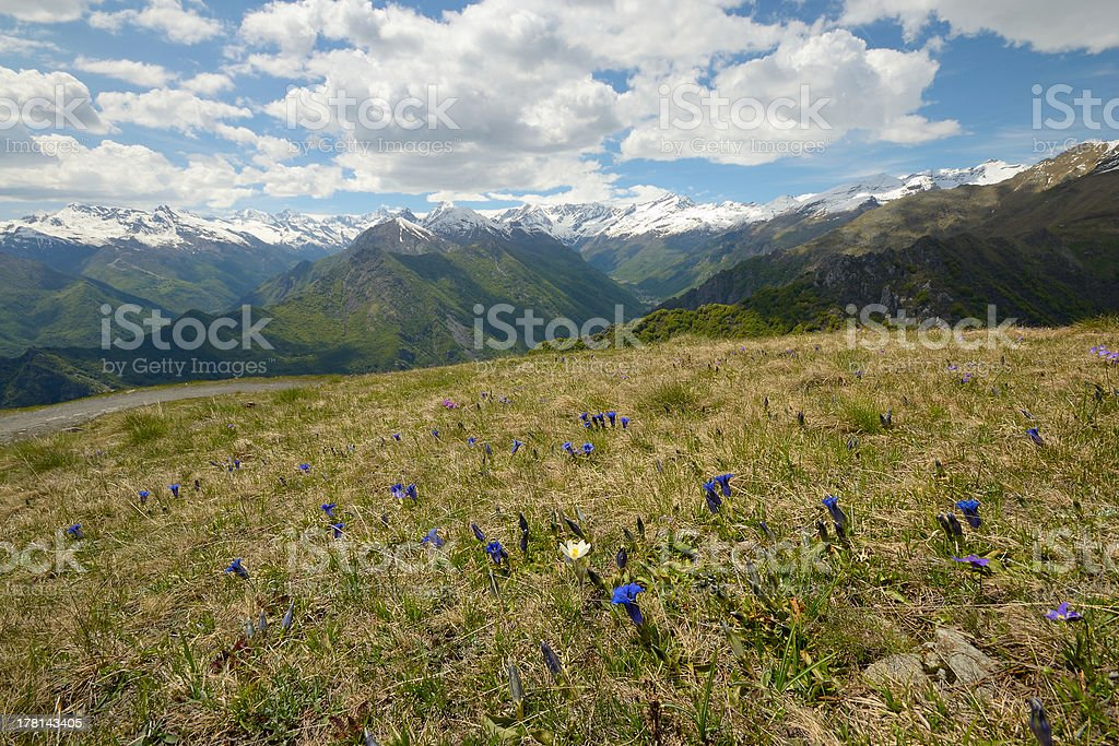 Colorful spring in the Alps royalty-free stock photo