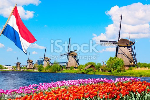 Colorful spring landscape in Netherlands, Europe. Famous windmills in Kinderdijk village with a tulips flowers flowerbed in Holland. Netherlands flag on the foreground.