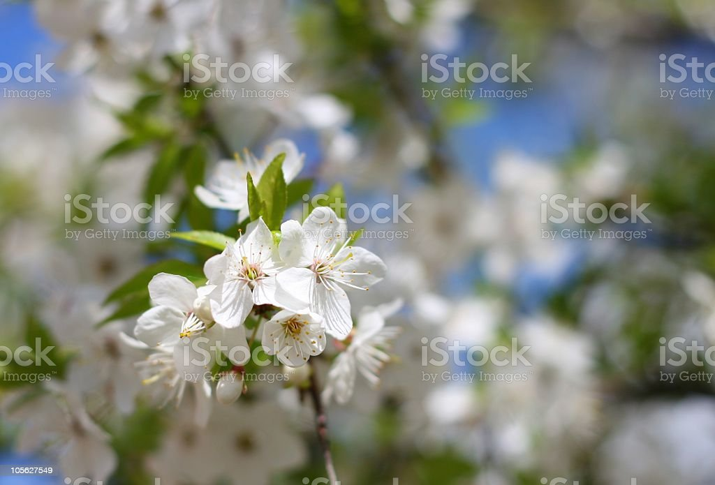 Colorful spring royalty-free stock photo