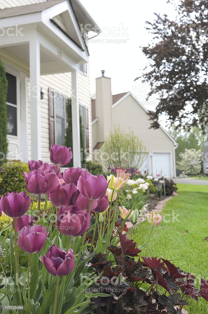 Colorful spring stock photo