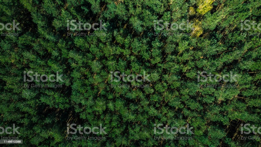 Colorful spring trees in forest, drone view.