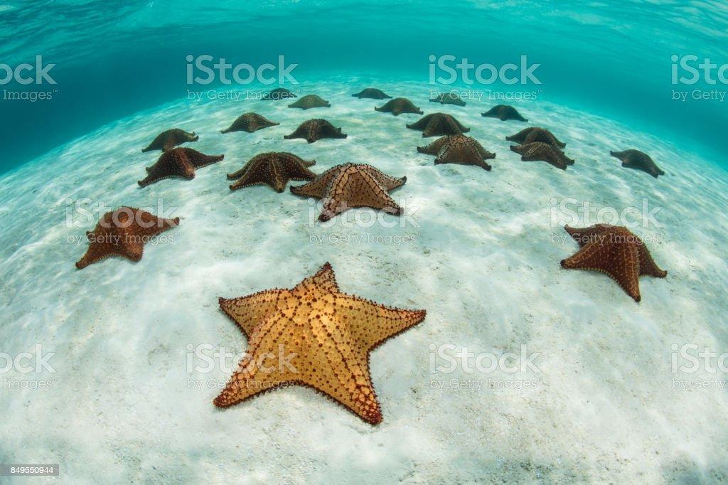 Coloridas estrellas de mar en mar Caribe - foto de stock