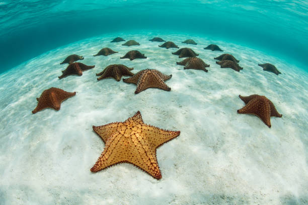 Colorful Starfish in Caribbean Sea stock photo