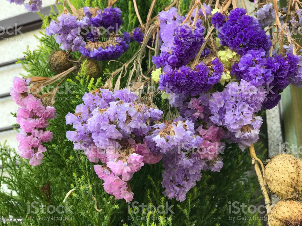 Colorful Statice flowers also known as limonium or sea lavender stock photo