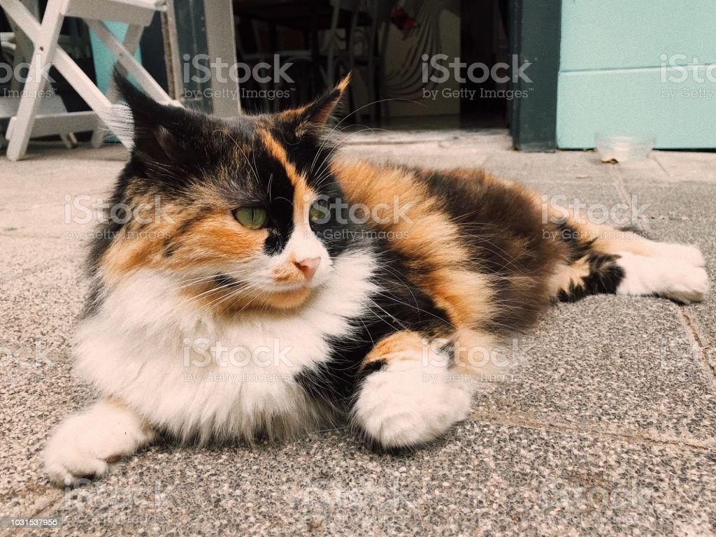 Colorful street cat sitting outdoors stock photo