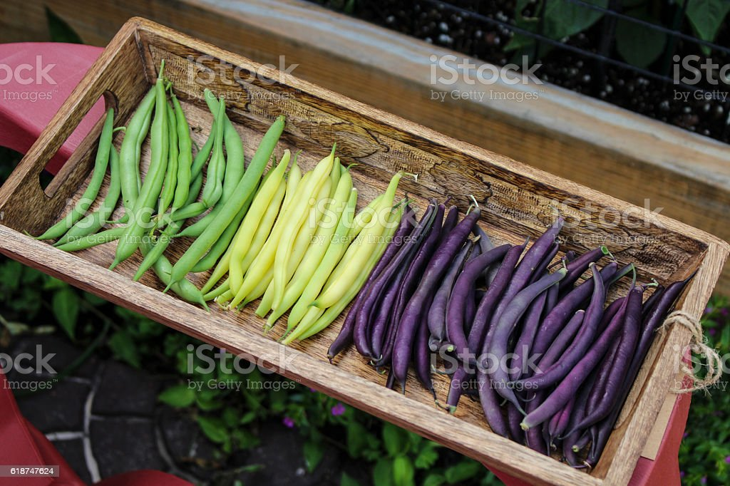 Colorful String Beans stock photo