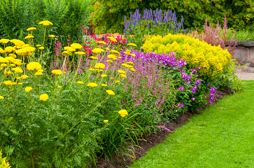 Colorful Summer Flowerbed