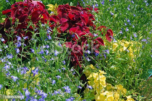 Colorful summer flowerbed with blooming plants in blue, green, yellow, red colors