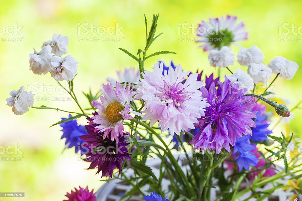 Colorful summer flowers bouquet in the sunshine royalty-free stock photo