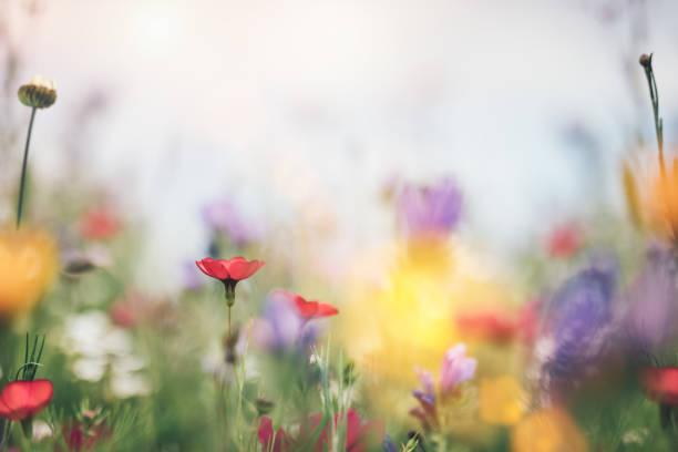 Colorful summer meadow picture id1094878152?b=1&k=6&m=1094878152&s=612x612&w=0&h=kmtkdfnzr5o tjrpm8d43nc q6w zgv5rq8 lcusdvg=