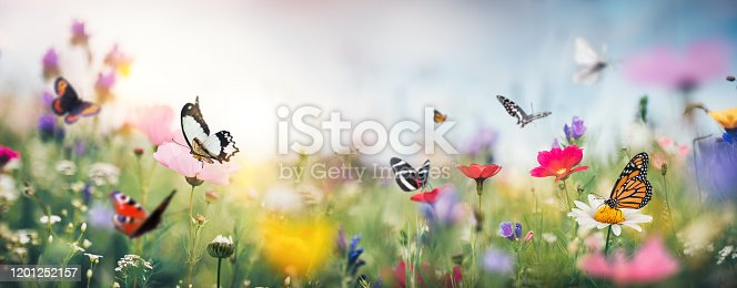 Summer meadow full of colorful flowers and butterflies flying around.