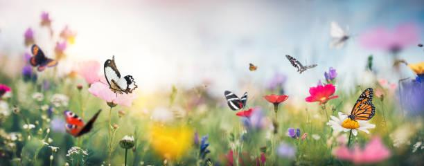 Colorful summer meadow picture id1201252157?b=1&k=6&m=1201252157&s=612x612&w=0&h=mewtksnu1vbp9ipppoopi8v34imbpi3nturlff6chdg=