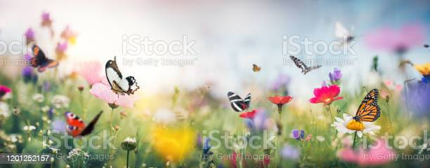 Photo of Colorful Summer Meadow