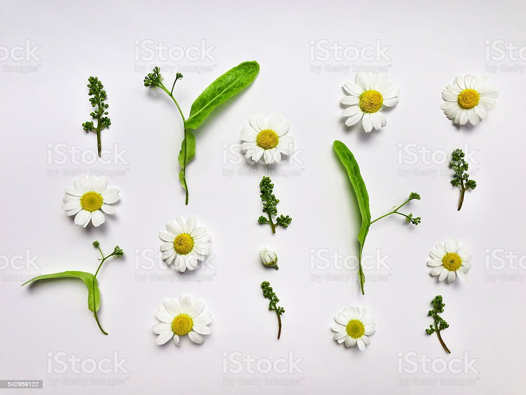 Colorful summer pattern with herbs and flowers. Flat lay stock photo