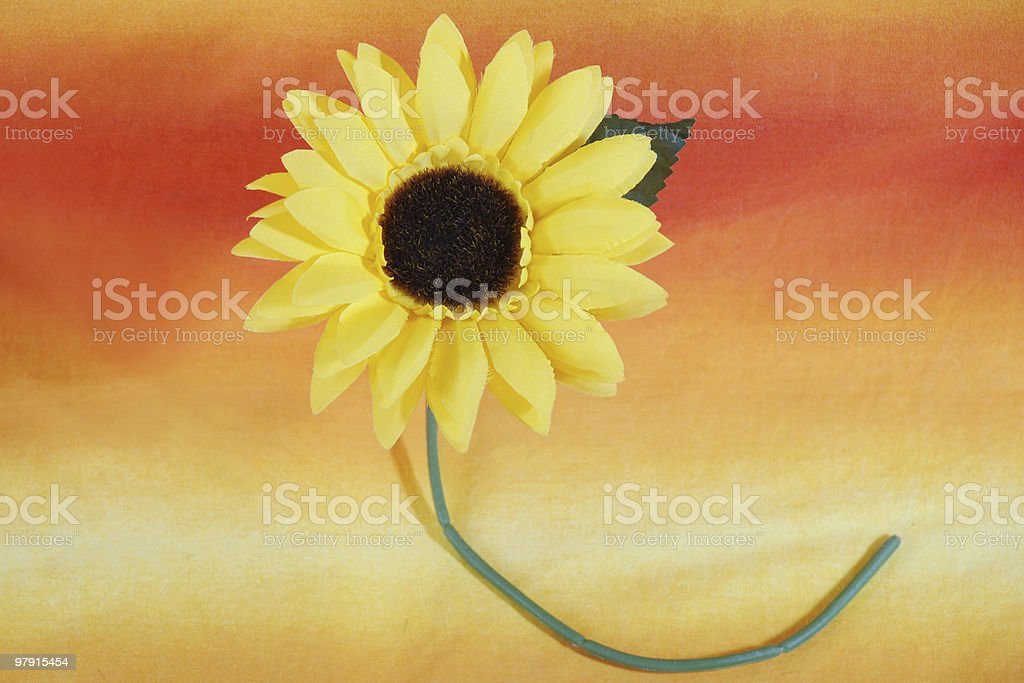 Colorful sunflower royalty-free stock photo