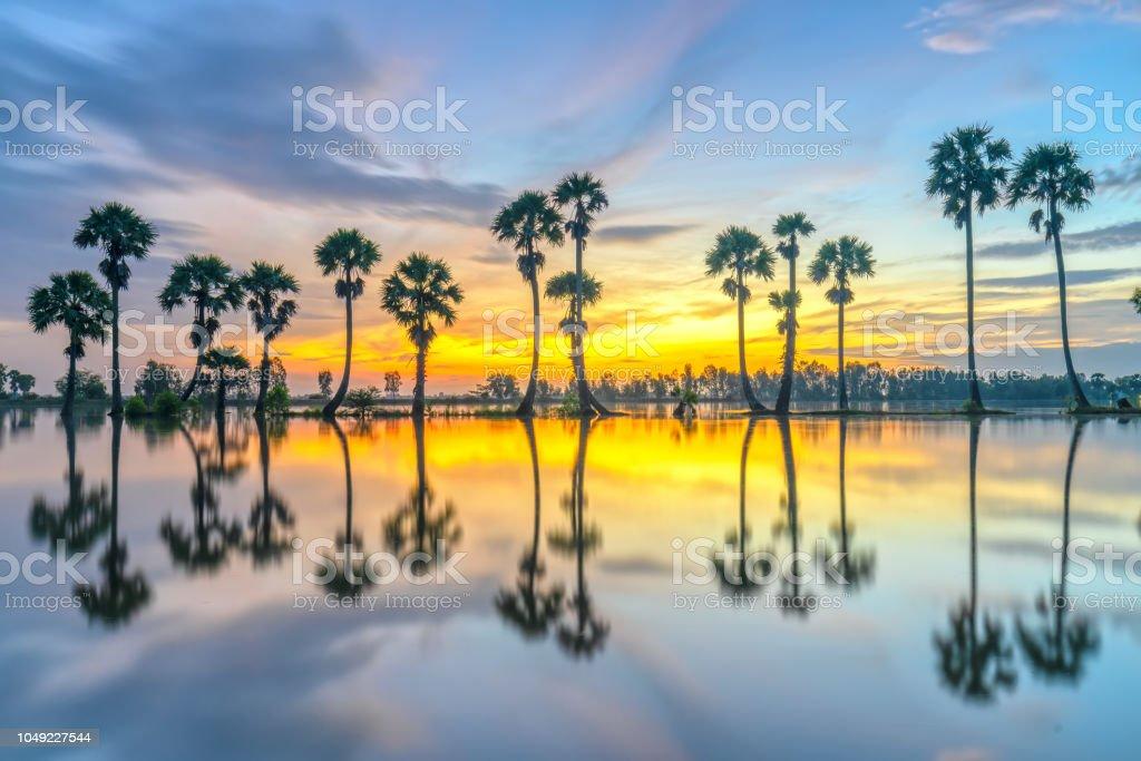 Bunte Sonnenaufgang mit hohen Palmen in den dramatischen Himmel aufsteigen – Foto