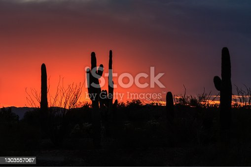 Colorful sunset in Arizona's Sonoran desert. Colorful clouds glowing orange, fading to dark blue. Saguaro and ocotillo cactus silhouetted in the foreground.