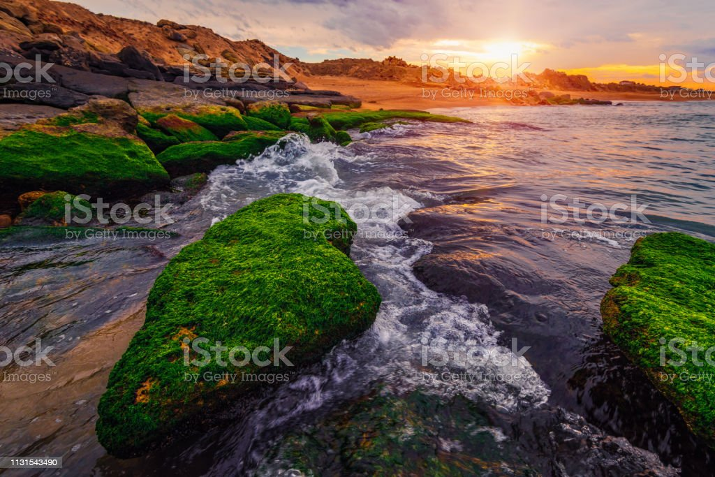 Colorful sunset on the sea shore with green algae royalty-free stock photo