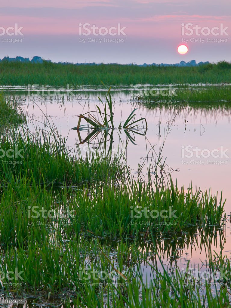 colorful sunset over marshland stock photo