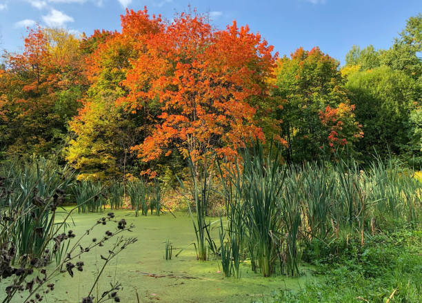 Bunter Sumpf mit Schilf und Schlamm in einem sonnigen Herbstpark – Foto