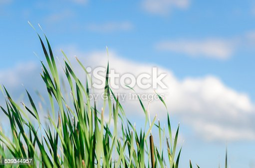 Green grass stretching up towards the sky.