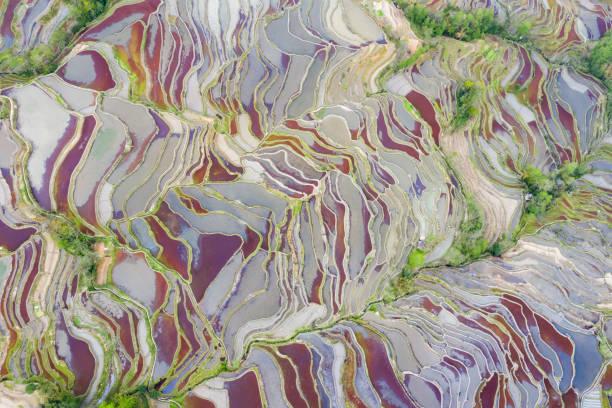 Farbige Terrassenlandschaft im Frühling – Foto