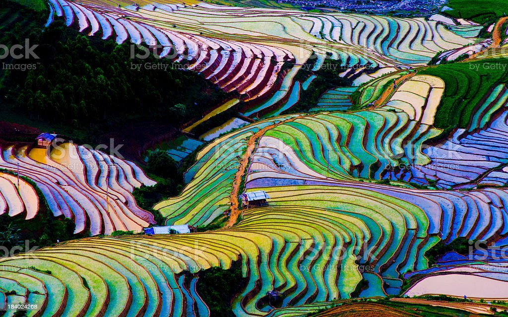 Colorful terraced rice fields in water season in Vietnam stock photo