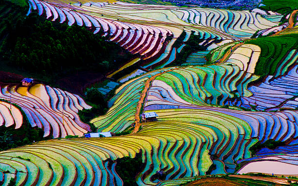 colorful terraced rice fields in water season in vietnam - terras veld stockfoto's en -beelden