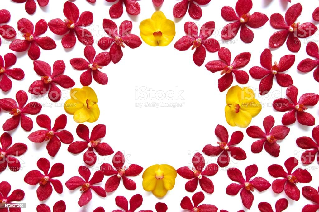 Colorful Thailand Orchids Set In Frame Or Wallpaper Stock Photo ...
