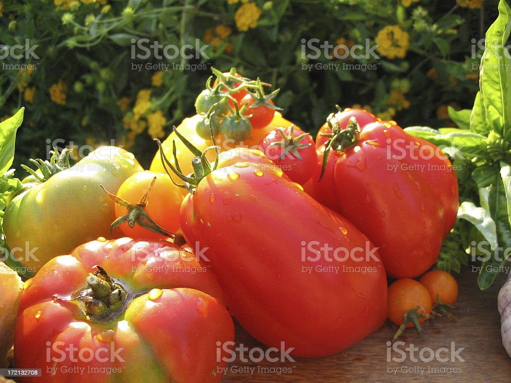 Colorful Tomatoes! royalty-free stock photo