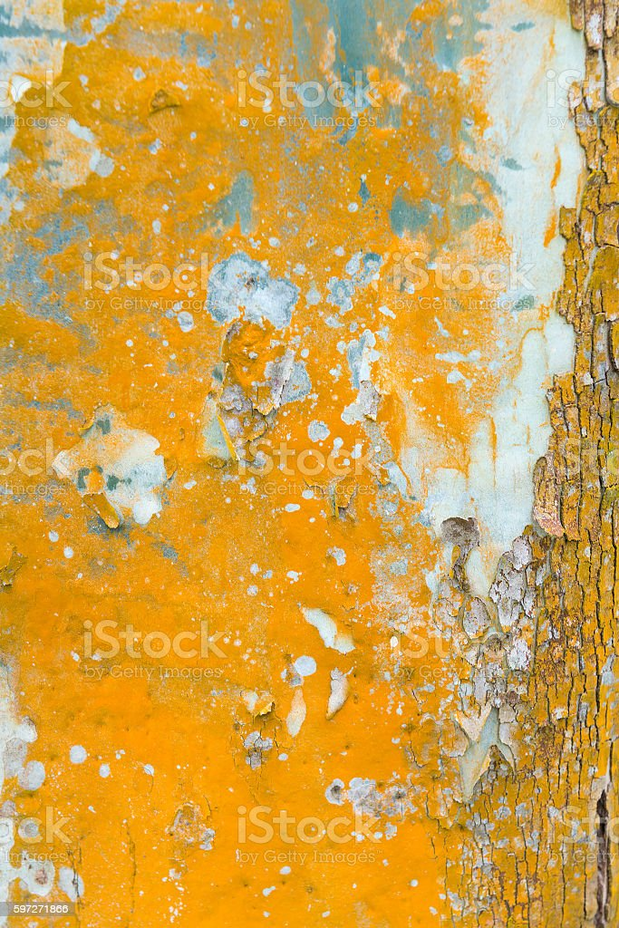 Colorful tree. royalty-free stock photo