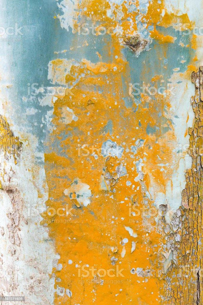 Arbre coloré. photo libre de droits