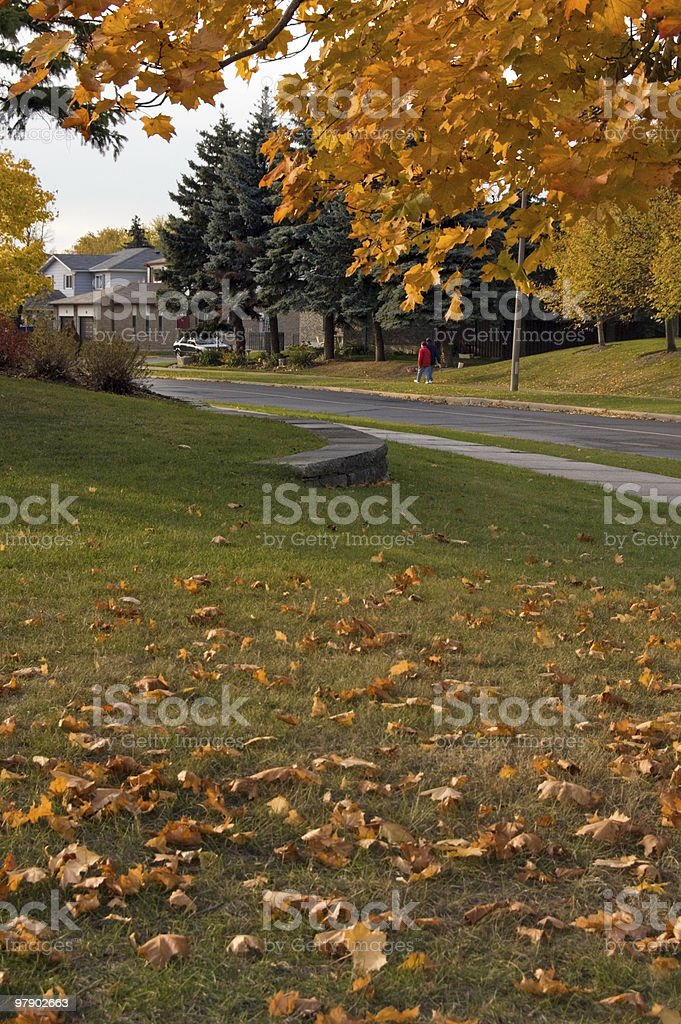 colorful tree royalty-free stock photo