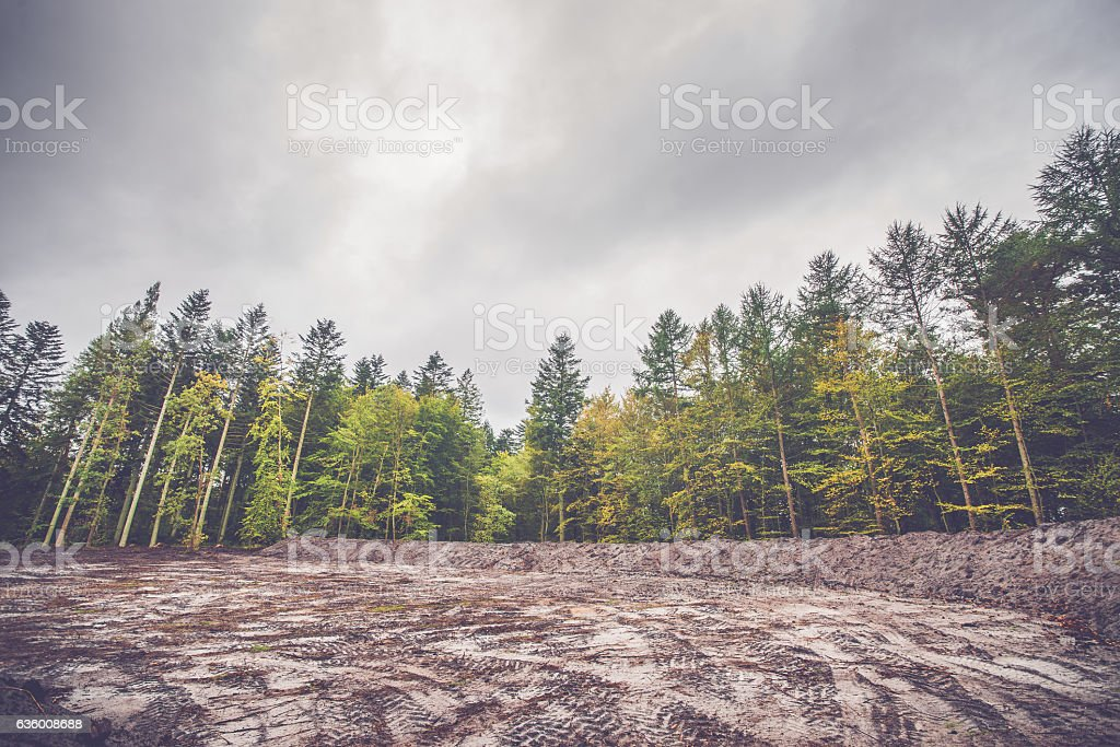 Colorful trees around a cleared area stock photo