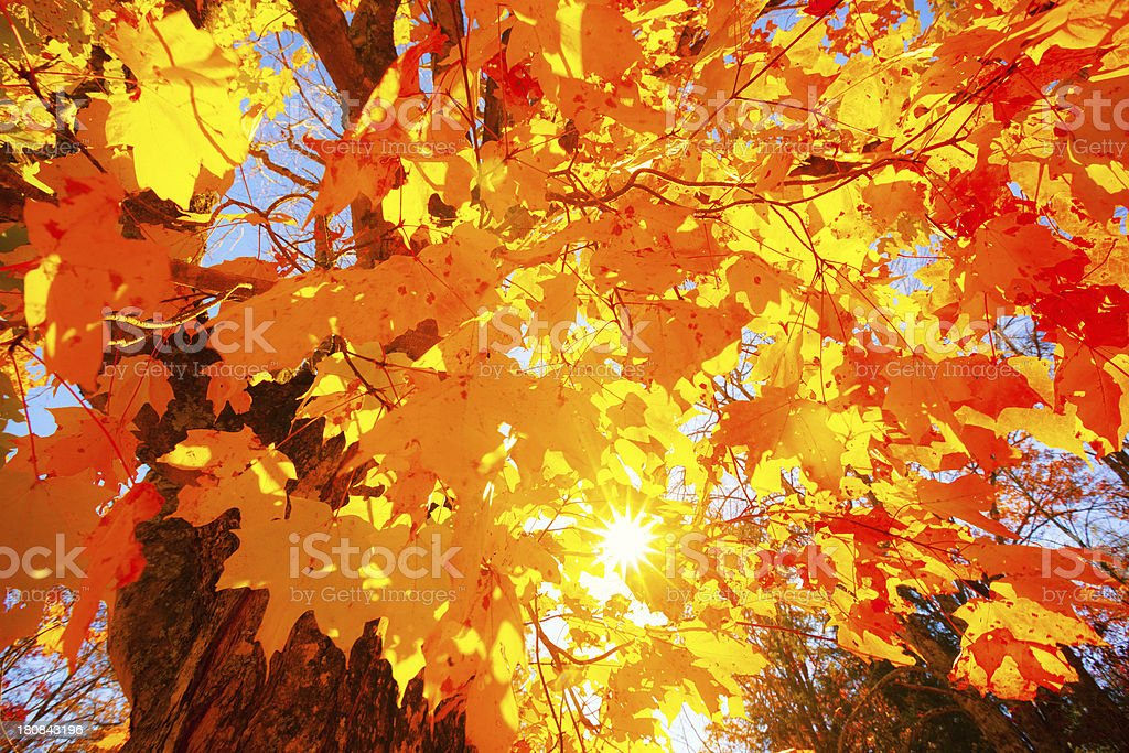 Colorful Trees during Fall royalty-free stock photo