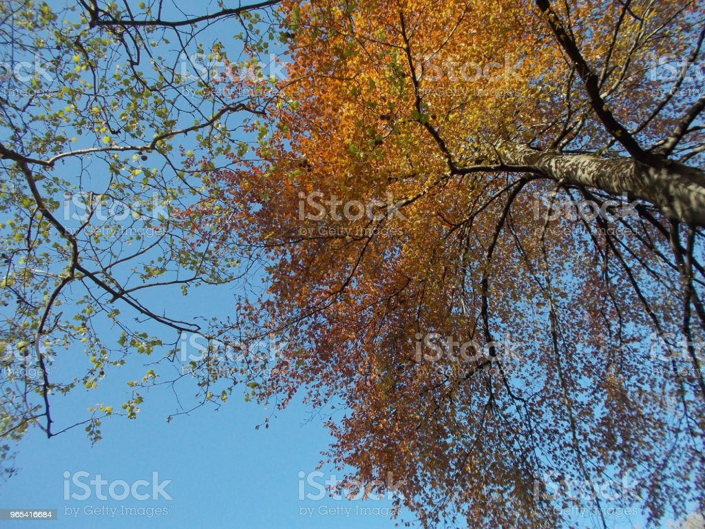 Colorful trees in autumn zbiór zdjęć royalty-free