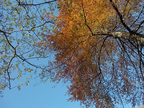 색상화 나무를 추절 0명에 대한 스톡 사진 및 기타 이미지