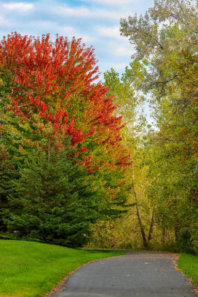 Colorful trees in parkland in Minnesota stock photo
