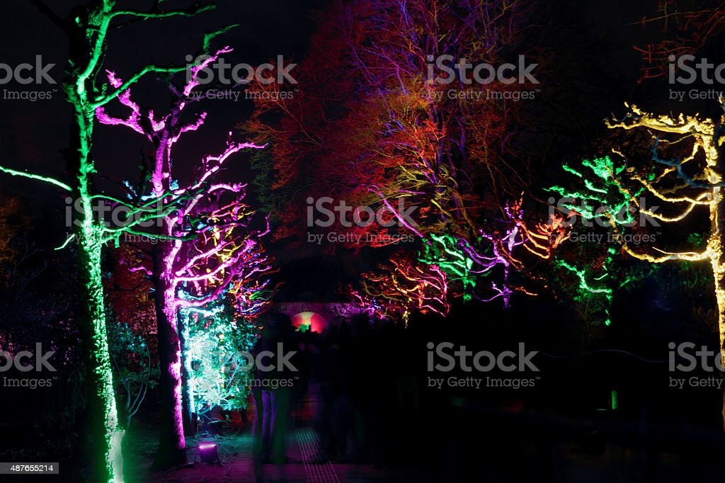 colorful trees stock photo