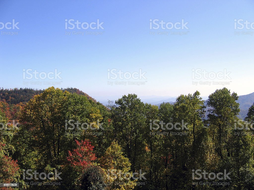 colorful trees royalty-free stock photo