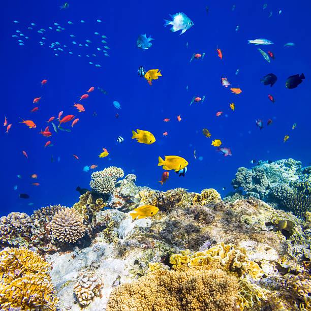 kolorowe ryby tropikalne na morze czerwone - tropikalna ryba zdjęcia i obrazy z banku zdjęć