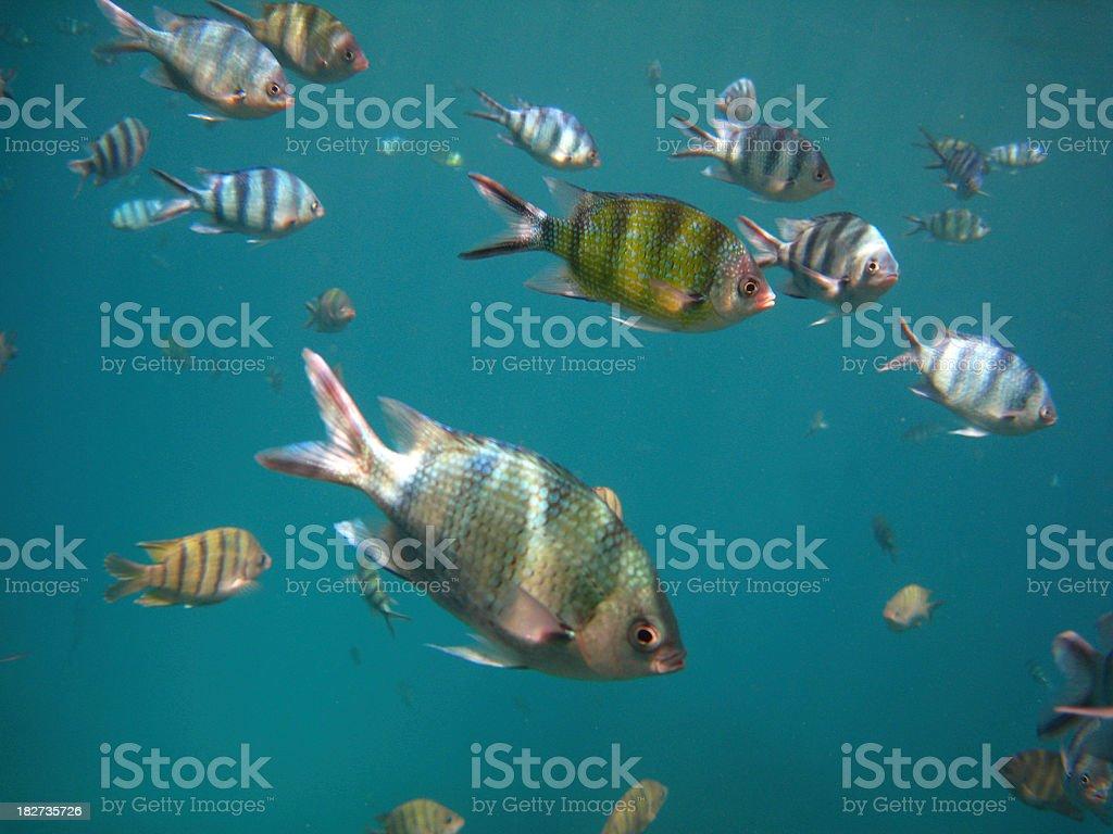 Bunte tropische Fische – Foto