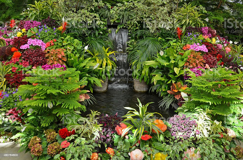 Colorful Tropical Garden Stock Photo - Download Image Now ... on Tropical Backyard  id=34868