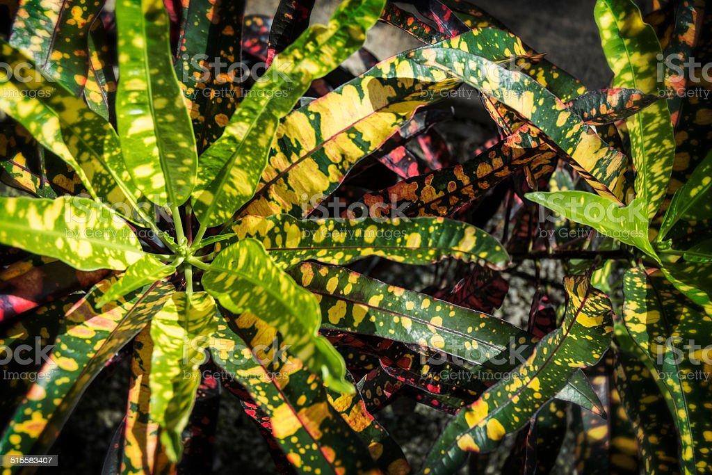 plante verte feuille verte et jaune