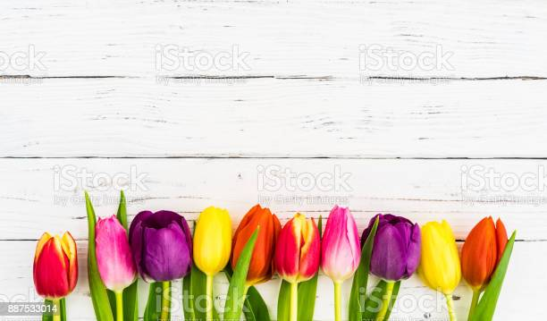 Colorful tulip flowers decoration on white wooden background picture id887533014?b=1&k=6&m=887533014&s=612x612&h=5yg51ispbukedncobxuzgpgpenqc1scjd itk66eahm=