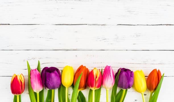 beyaz ahşap arka plan üzerinde renkli lale çiçek dekorasyon - i̇stanbul stok fotoğraflar ve resimler