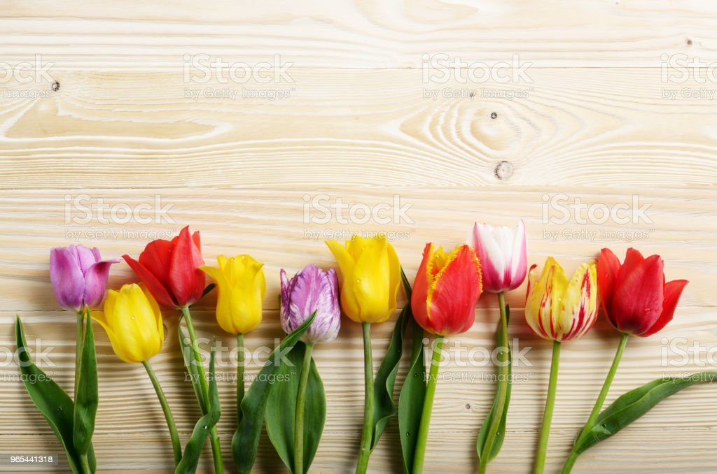 Colorful tulip flowers on wooden table background with space for text royalty-free stock photo
