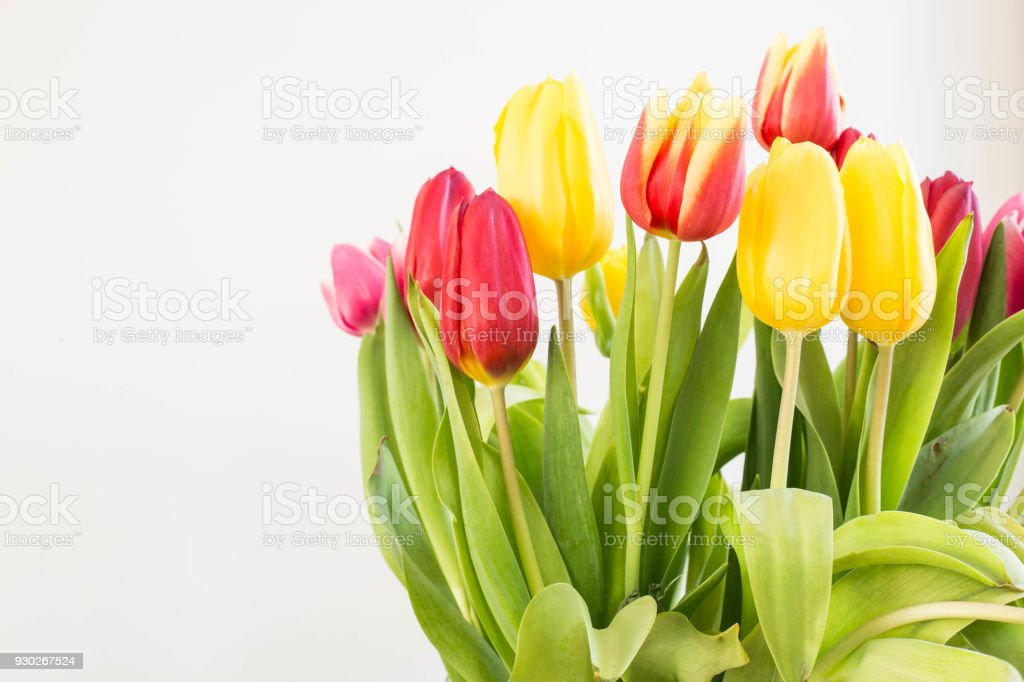 Bunte Tulpen Blumen, Frühling Dekoration Ostern Interieur – Foto