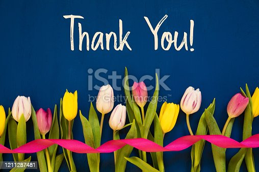 English Text Thank You. White And Pink Tulip Spring Flowers With Ribbon. Blue Wooden Background